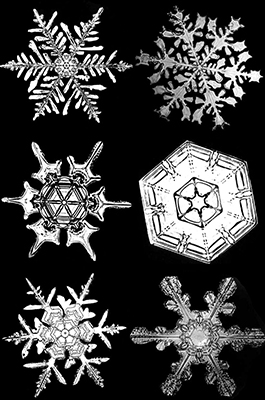 Magnified Snowflakes